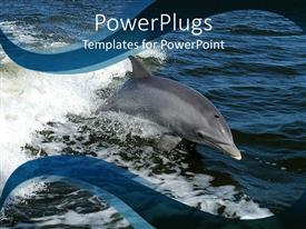 PowerPlugs: PowerPoint template with beautiful dolphin swimming in calm blue oceans