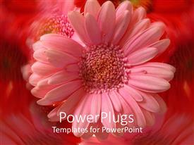 PowerPlugs: PowerPoint template with a beautiful flower with amazing reflection in the background