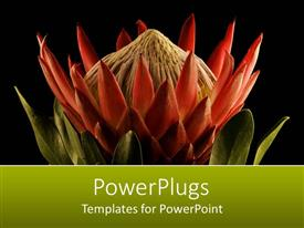 PowerPoint template displaying a beautiful flower with blackish background