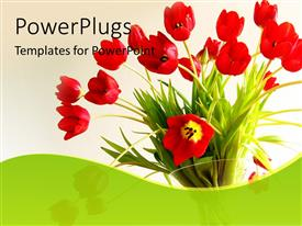 PowerPoint template displaying beautiful flower bouquet with red tulips in white background