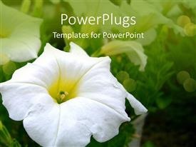 PowerPlugs: PowerPoint template with a beautiful flower with its reflection in the background