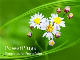 PowerPlugs: PowerPoint template with beautiful flowers and flower buds along with green background