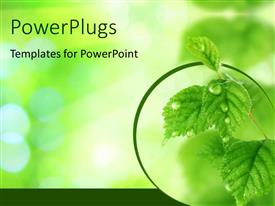 PowerPlugs: PowerPoint template with beautiful Fresh Leaves with Water drops