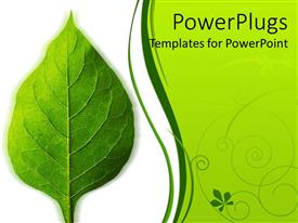 PowerPlugs: PowerPoint template with a beautiful green leaf and the place for text on the other side