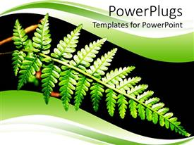 PowerPlugs: PowerPoint template with a beautiful leaf with black background