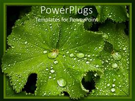 PowerPlugs: PowerPoint template with a beautiful leaf with a number of dew drops