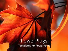 PowerPlugs: PowerPoint template with a beautiful leaf with its reflection in the background