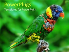 PowerPoint template displaying a beautiful lori wit greenery in the background