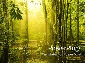 PowerPlugs: PowerPoint template with beautiful morning sunlight shine into green forest