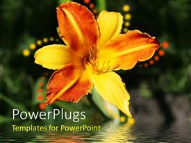 PowerPlugs: PowerPoint template with beautiful orange day lily with bright reflection on water surface