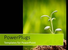 PowerPlugs: PowerPoint template with a beautiful plant with blurred background