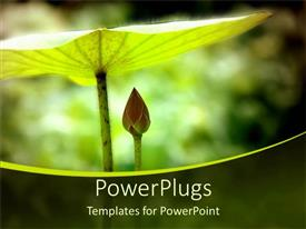 PowerPlugs: PowerPoint template with a beautiful plant shielding the other plant with a blurred background