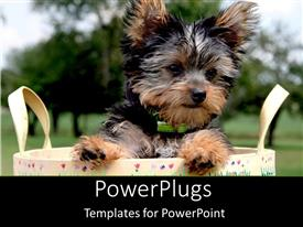 PowerPlugs: PowerPoint template with a beautiful puppy in a bag