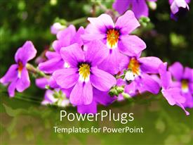 PowerPlugs: PowerPoint template with beautiful purple and yellow flowers with blurry green background