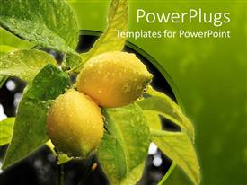 PowerPoint template displaying a beautiful representation of lemon ad leaves with greenish background