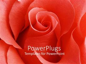 PowerPlugs: PowerPoint template with a beautiful rose with place for text in the middle