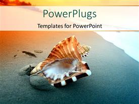 PowerPoint template displaying beautiful Shell with sand on a sea shore
