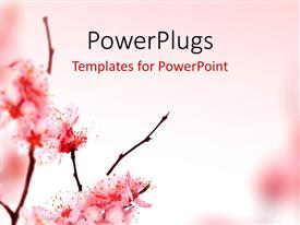 PowerPlugs: PowerPoint template with beautiful spring blossom in pink