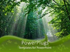 PowerPoint template displaying beautiful sunshine light through the big green trees in the walking trail