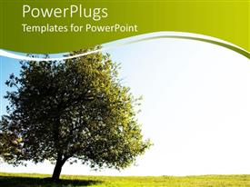 PowerPlugs: PowerPoint template with a beautiful tree and its reflection along with grass