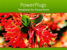 PowerPlugs: PowerPoint template with a beautiful view of the scarlet flower along with leaves