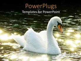 PowerPlugs: PowerPoint template with beautiful white swan with yellow bick moving on sparkling river