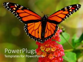 PowerPlugs: PowerPoint template with beautiful yellow butterfly close up on red lantana flower