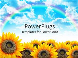 PowerPoint template displaying beautiful yellow sunflower field with blue sky and rainbow