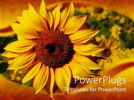 PowerPlugs: PowerPoint template with beautiful yellow sunflower in gardenwith nice frame