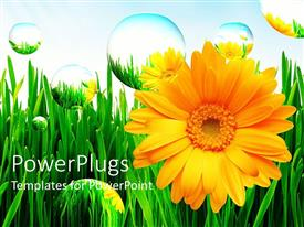 PowerPlugs: PowerPoint template with beautiful yellow sunflowers on green grass with bubbles floating around