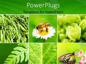PowerPoint template displaying a bee and a butterfly with a variety of leaves