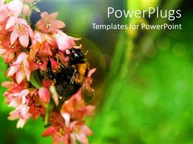 PowerPoint template displaying a bee feeding on a bunch of flowers with green background