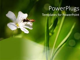 PowerPlugs: PowerPoint template with bee standing on white flower in bright green background