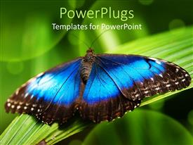 PowerPlugs: PowerPoint template with big blue and black butterfly on a grass blade
