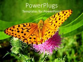 PowerPlugs: PowerPoint template with big yellow butterfly on a natural pink flower stalk