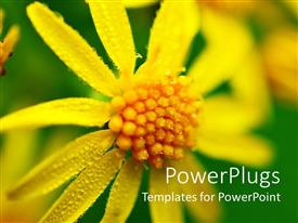 PowerPlugs: PowerPoint template with a big yellow flower on a green colored background