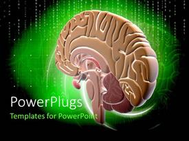 PowerPlugs: PowerPoint template with binary digits on green and black background with colorful human brain