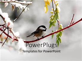 PowerPlugs: PowerPoint template with a bird on the branch of a tree in winters