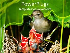 PowerPlugs: PowerPoint template with a bird feeding the children with greenery in the background