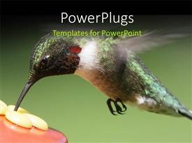 PowerPlugs: PowerPoint template with a bird with a greenish background and place for text