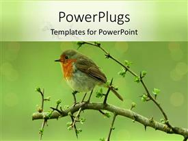 PowerPoint template displaying a bird sitting on a branch of a tree peacefully