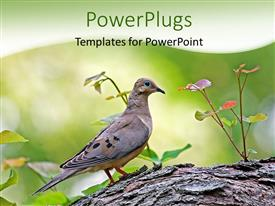 PowerPlugs: PowerPoint template with a bird with a tree and greenish background