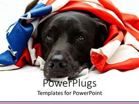 PowerPlugs: PowerPoint template with black dog with the US flag Wrapped round it