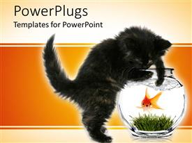 PowerPlugs: PowerPoint template with black kitten trying to reach scared goldfish in bowl