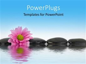 PowerPlugs: PowerPoint template with black stones and pink flower with water