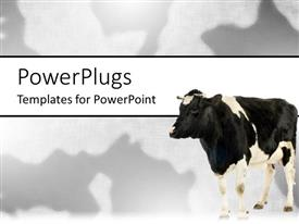 PowerPlugs: PowerPoint template with black and white cow on matching black and white background