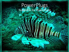 PowerPlugs: PowerPoint template with black and white lion fish swimming