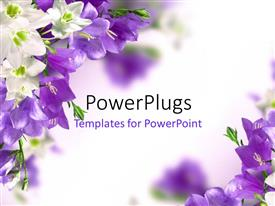 PowerPlugs: PowerPoint template with blue campanulas and white lily with white color
