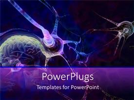 PowerPoint template displaying blue and purple neurons connecting in brain for science and cognitive metaphors