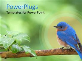 PowerPlugs: PowerPoint template with bluebird perched on tree branch with leaves